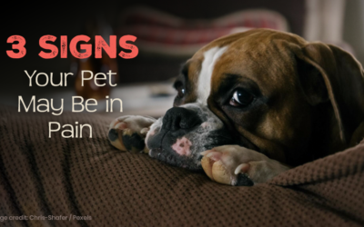 3 Signs Your Pet May Be in Pain
